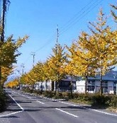 Ichou