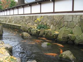 Hidafurukawa5
